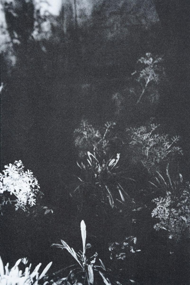 Anne-Marie Proulx, Le jardin d'après
